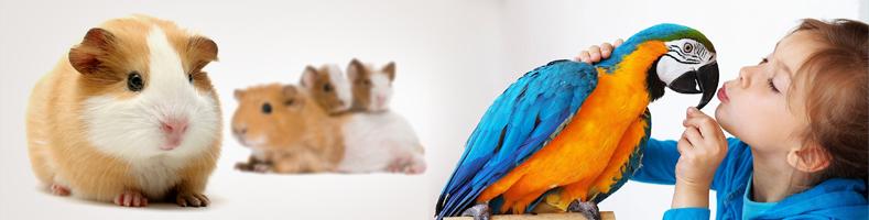 Karmy dla ptaków i gryzoni